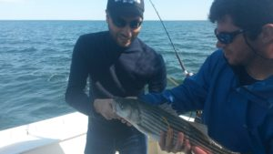 Connecticut fishing report 5 20 16 ct fishing charters for Fishing charters ct
